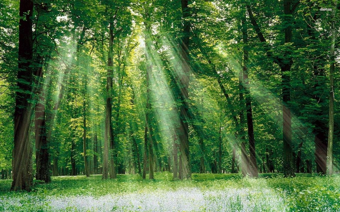 green nature trees forests grass outdoors sunlight wallpaper