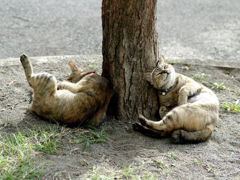 trees cats animals funny rest wallpaper