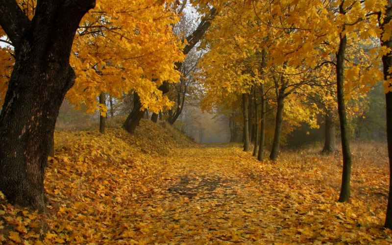 nature trees autumn leaves paths fallen leaves wallpaper