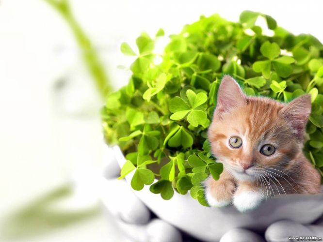 cats plants kittens wallpaper