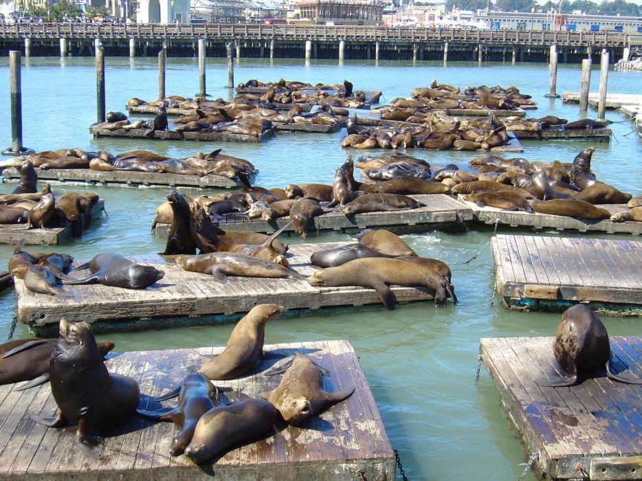 sea lions seal seals lion (20)_JPG wallpaper