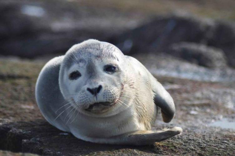 sea lions seal seals lion (3) wallpaper