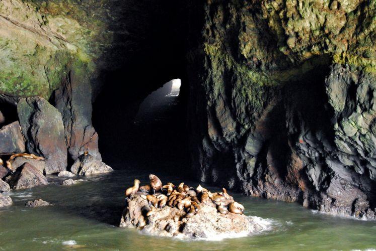 sea lions seal seals lion (1) wallpaper