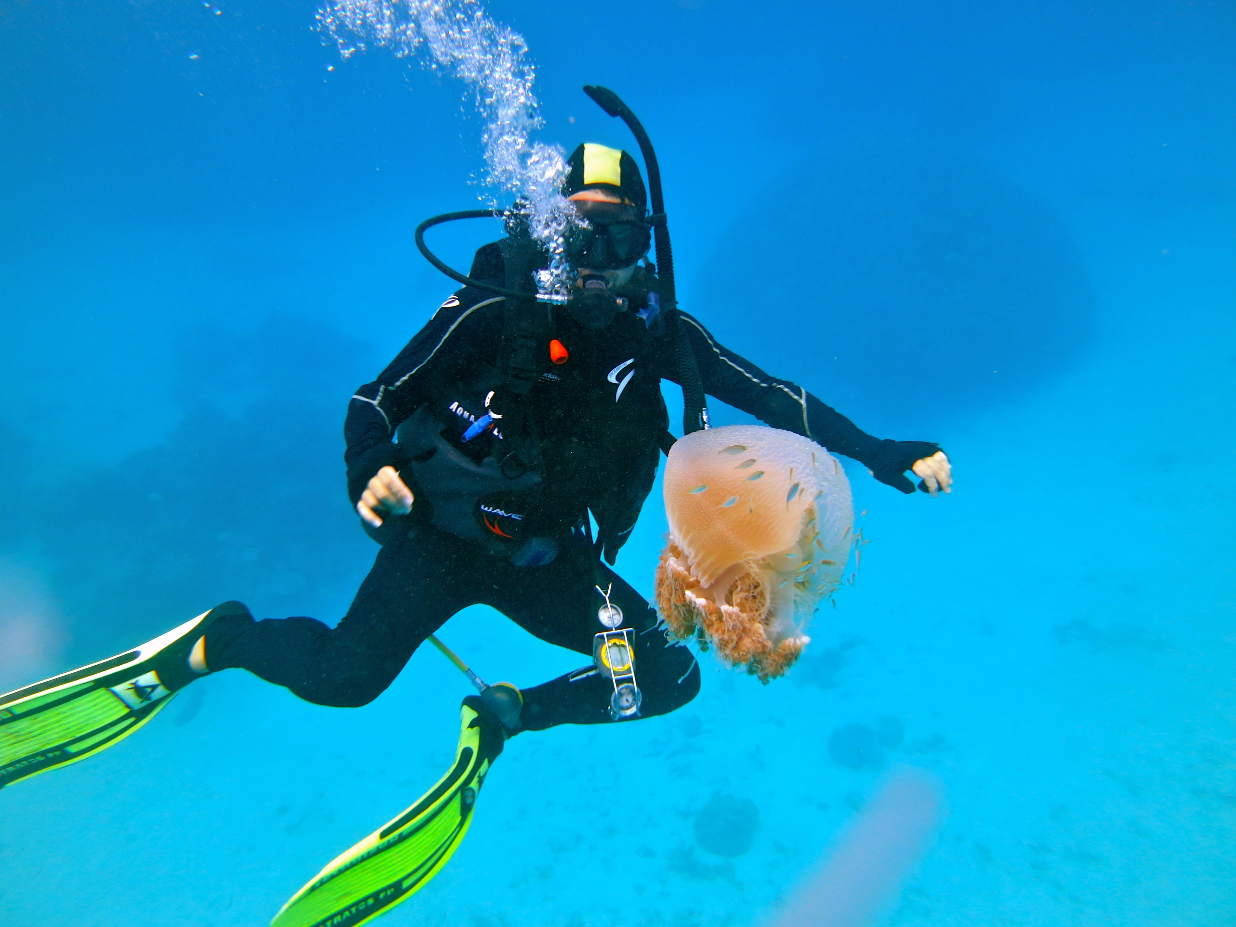 scuba diving wallpaper wallpapers - photo #37