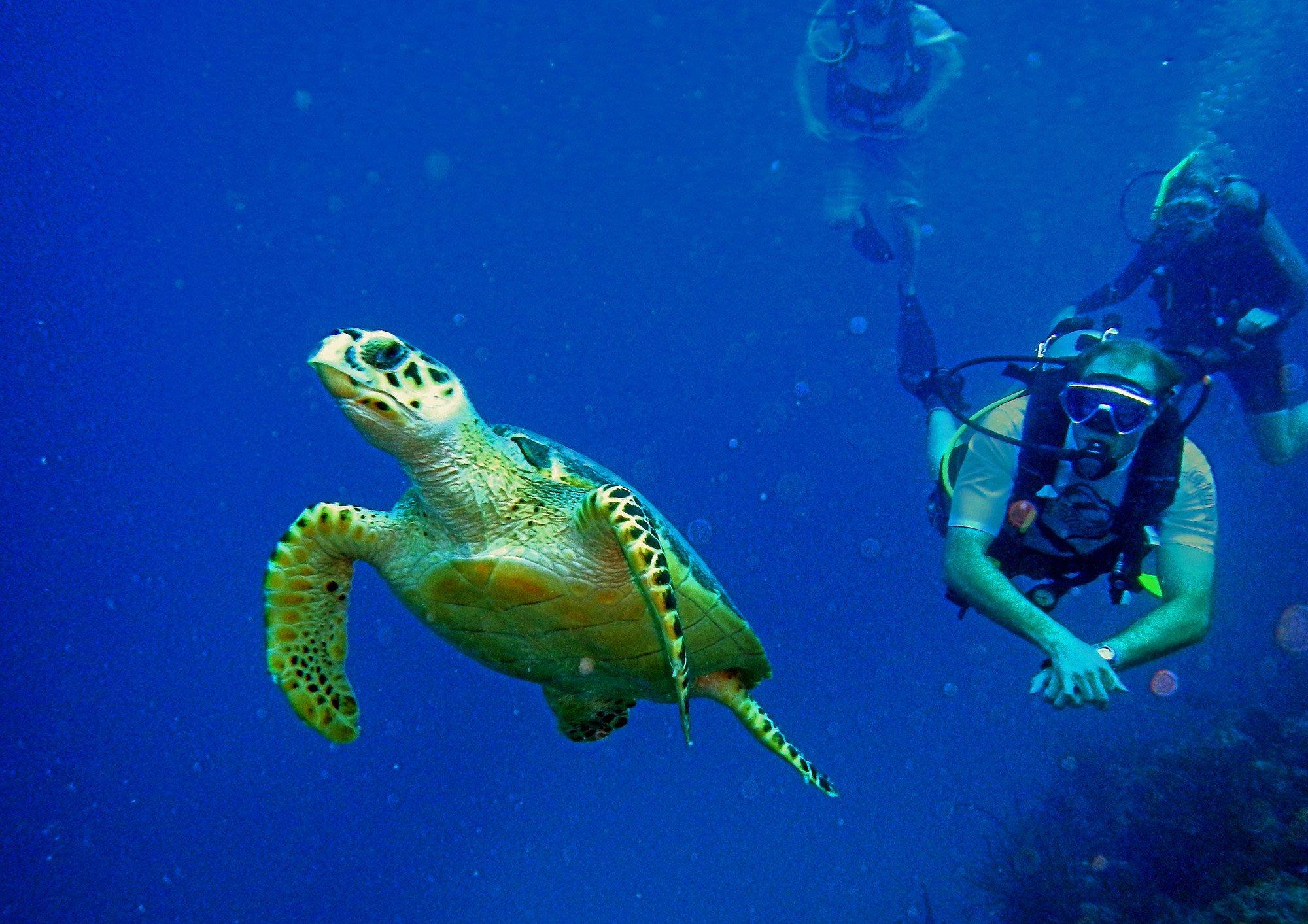 Scuba Diving Diver Ocean Sea Underwater Turtle Wallpaper