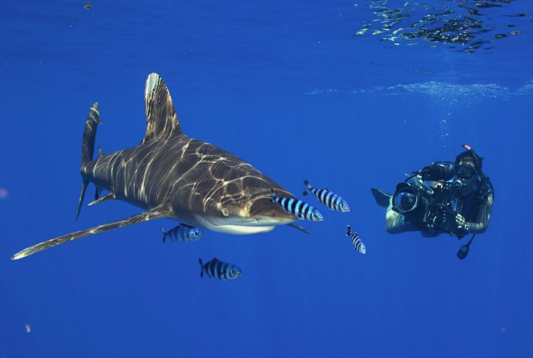 2560x1600 ocean sharks - photo #15