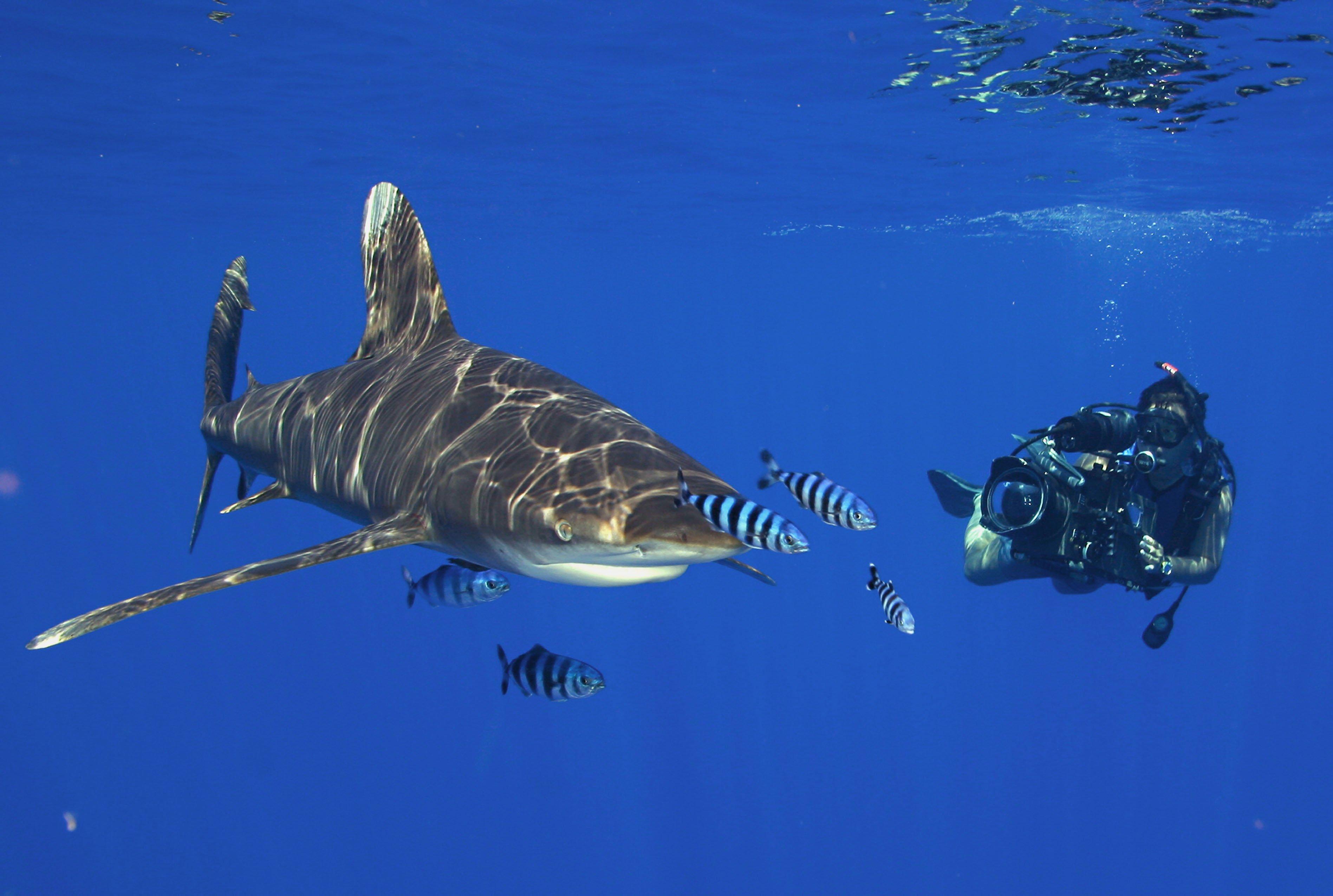 scuba diving wallpaper wallpapers - photo #34