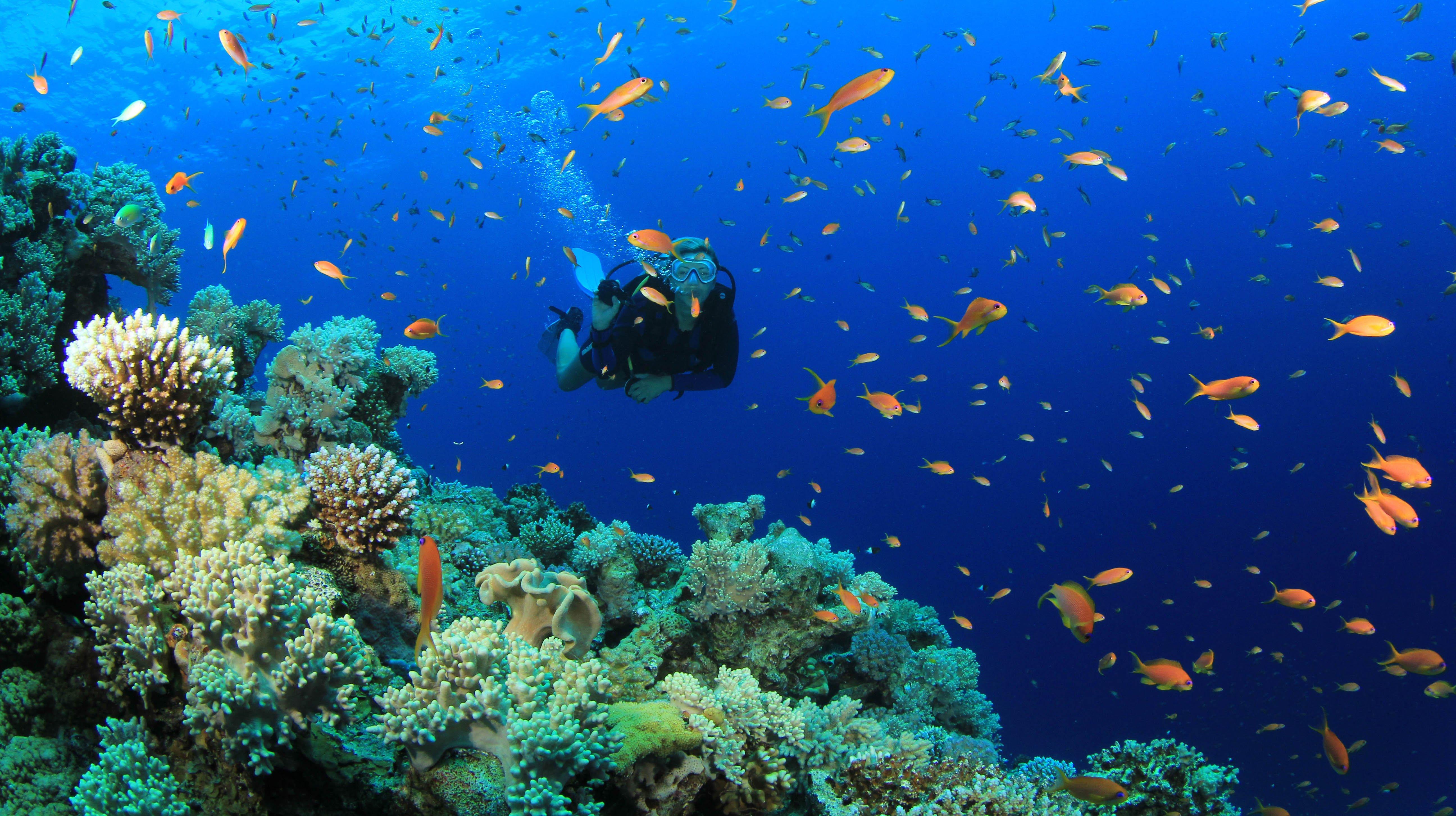 Scuba diving diver ocean sea underwater fish wallpaper ...