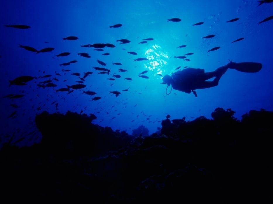 scuba diving diver ocean sea underwater fish wallpaper