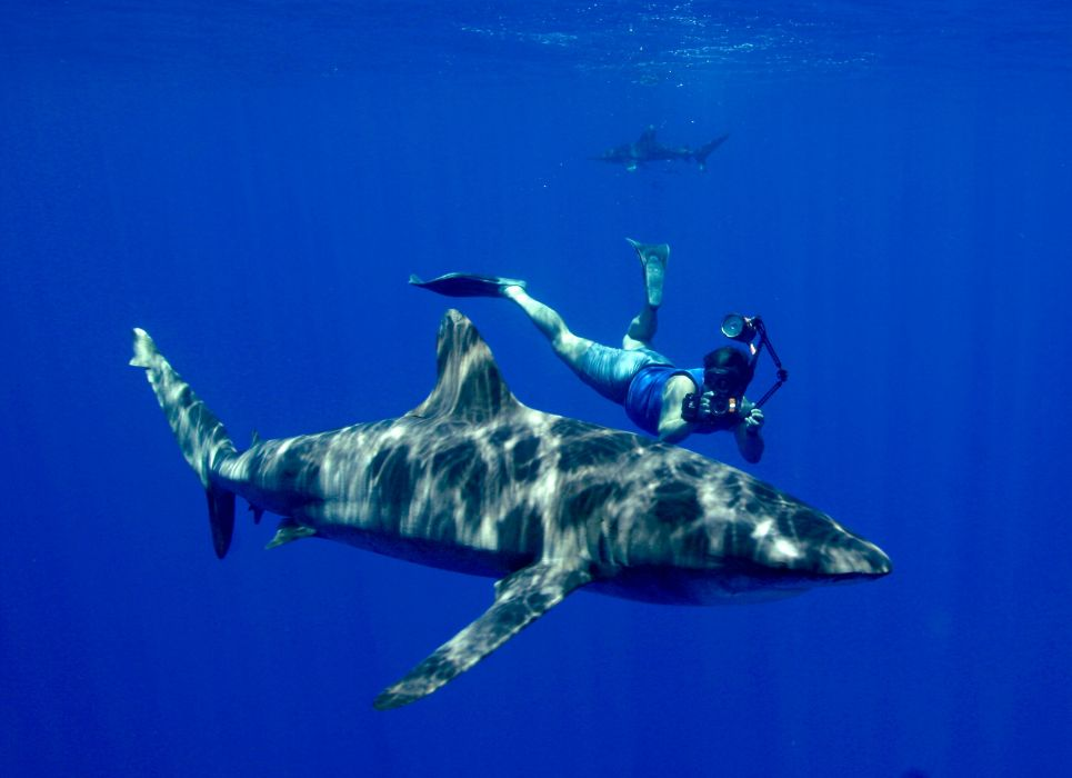 Scuba Diving Diver Ocean Sea Underwater Shark Wallpaper 3516x2550 332463 Wallpaperup
