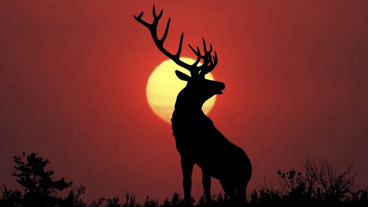 bull elk elks deer (4) wallpaper