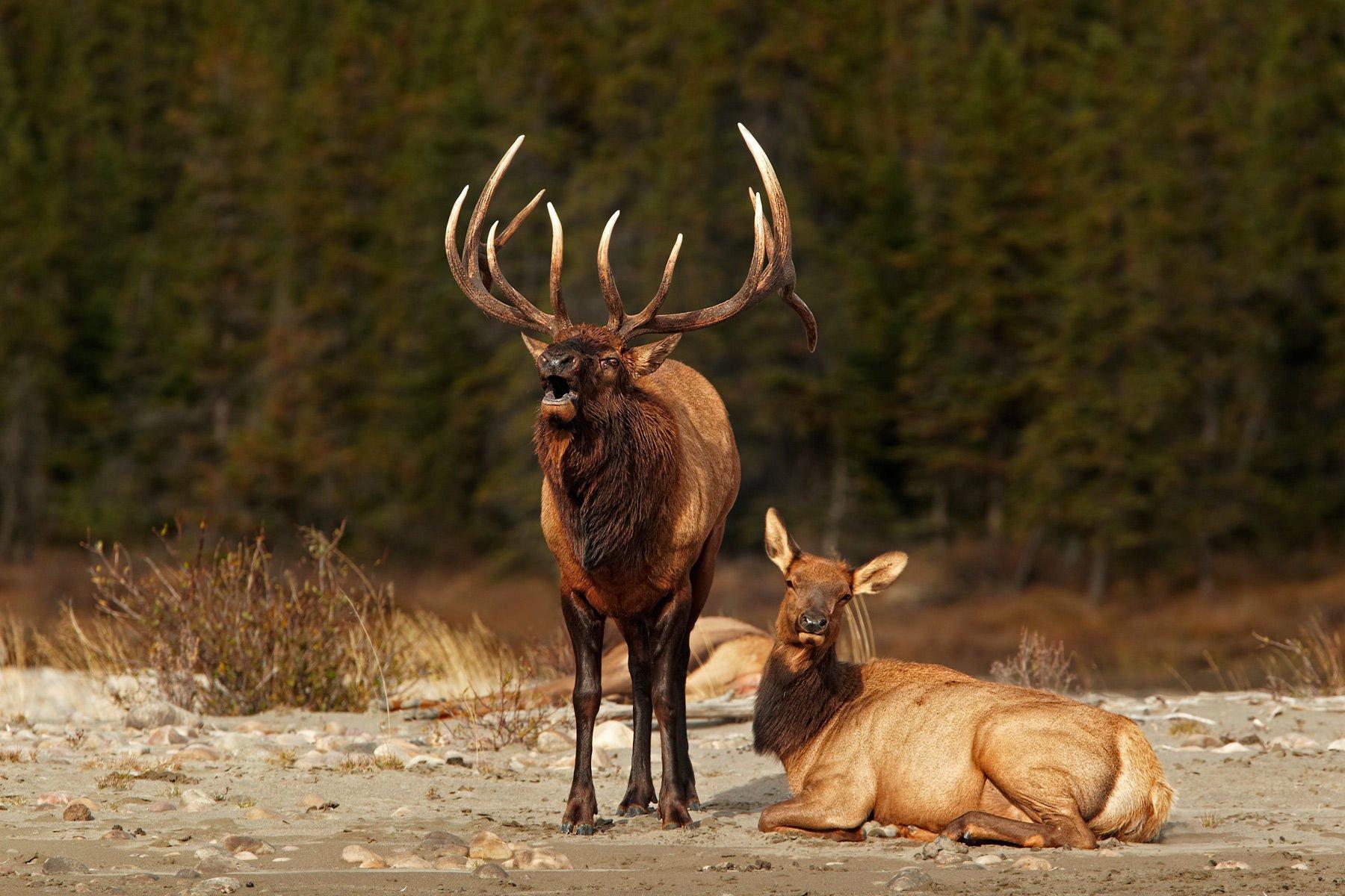 live deer hunting wallpapers