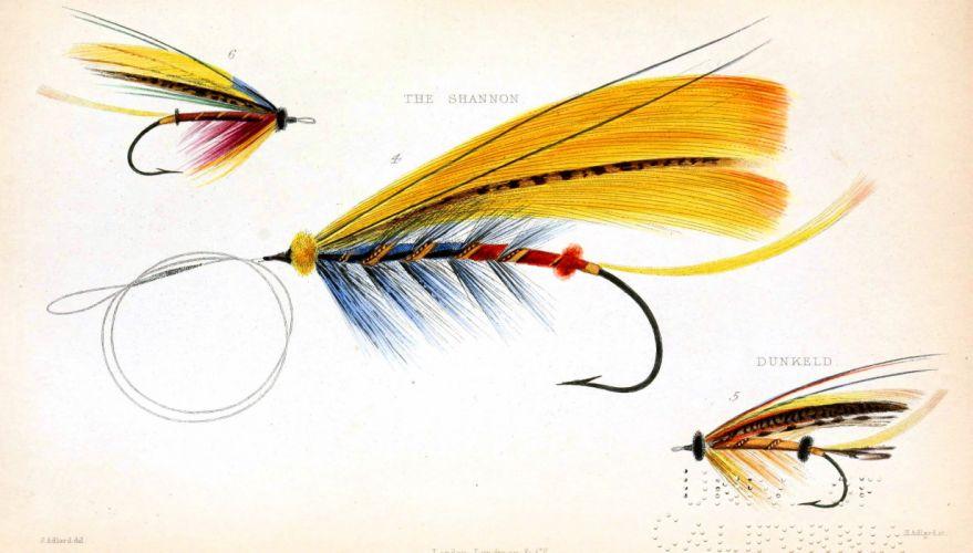FISHING fish sport water fishes (62) wallpaper