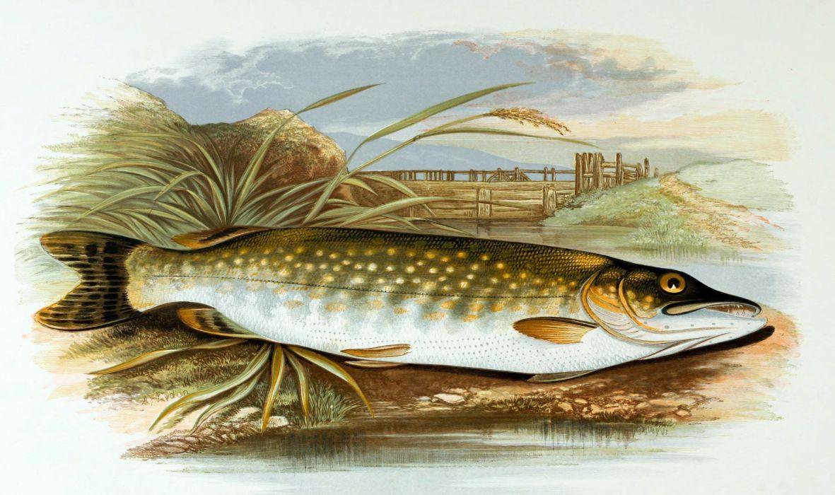 FISHING fish sport water fishes (71) wallpaper