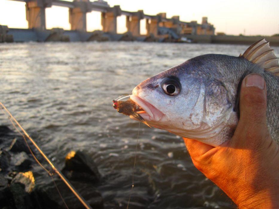 FISHING fish sport water fishes (10) wallpaper