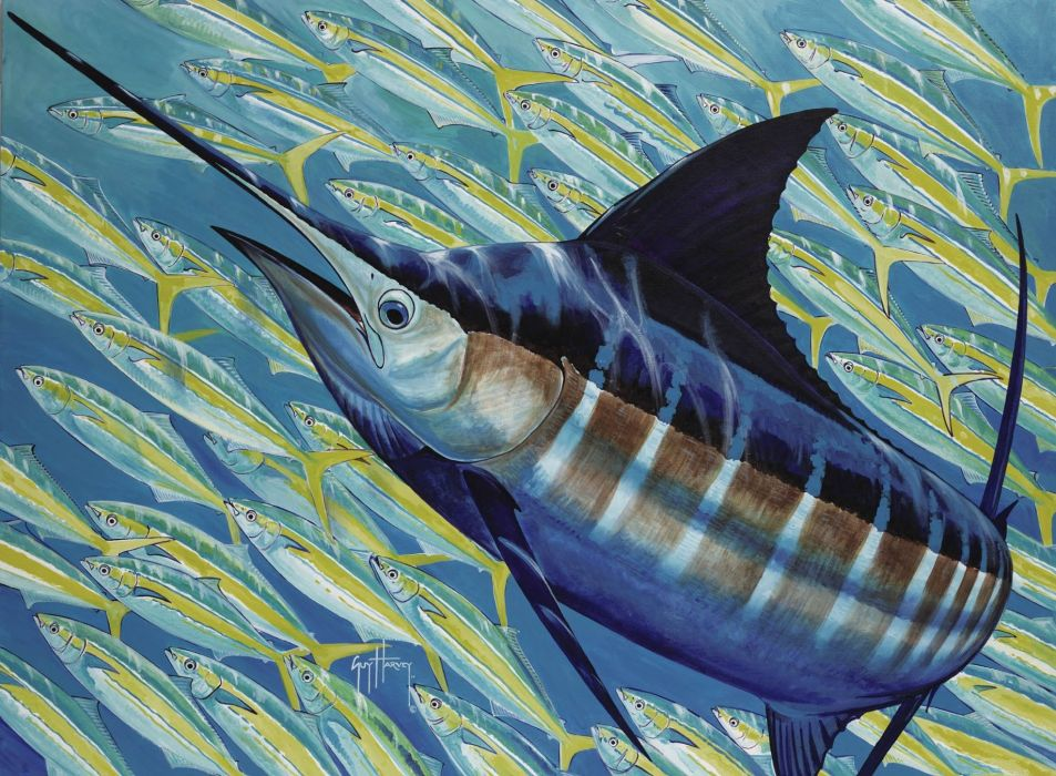 FISHING fish sport water fishes (15) wallpaper