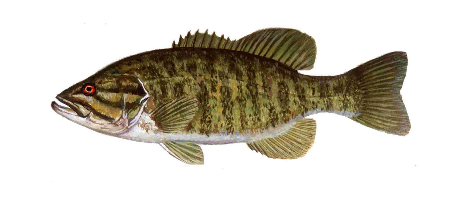 FISHING fish sport water fishes (32) wallpaper