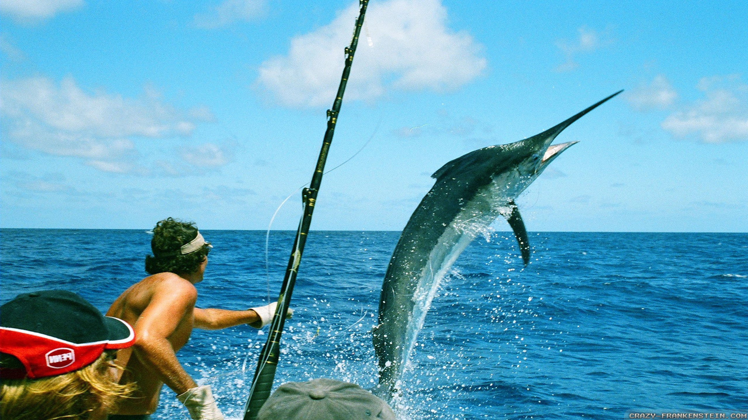 Fishing fish sport water fishes 27 wallpaper 2560x1440 for Sport fishing games