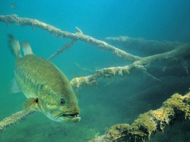 FISHING fish sport water fishes (23) wallpaper
