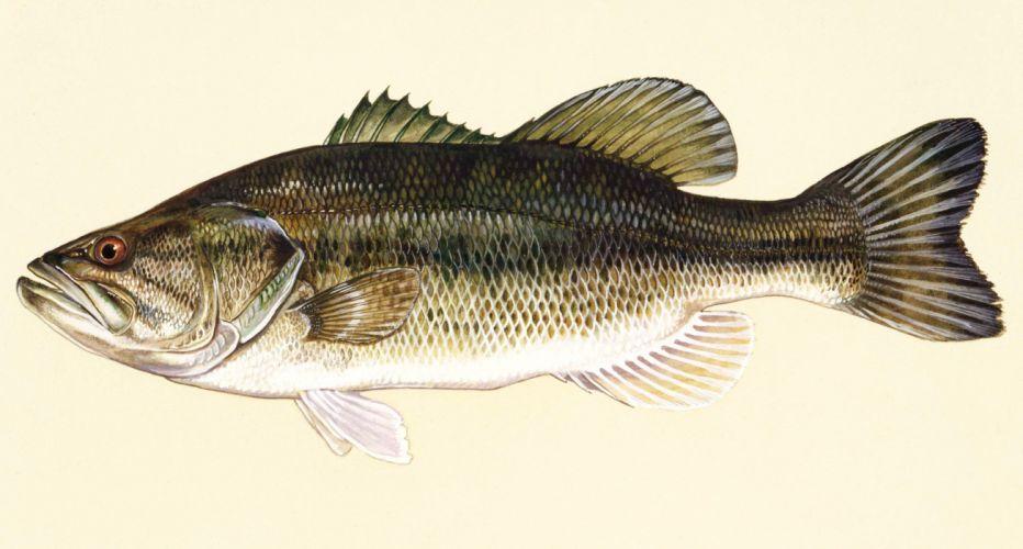 FISHING fish sport water fishes (22) wallpaper