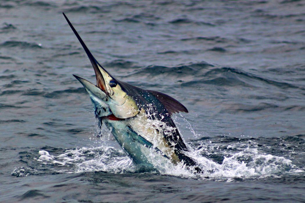 FISHING fish sport water fishes (19) wallpaper