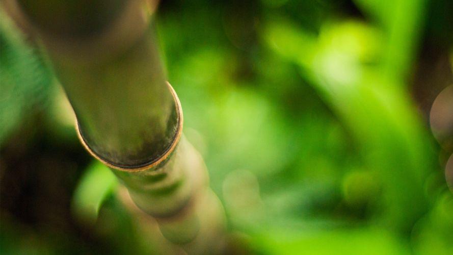 nature bamboo plants macro depth of field wallpaper