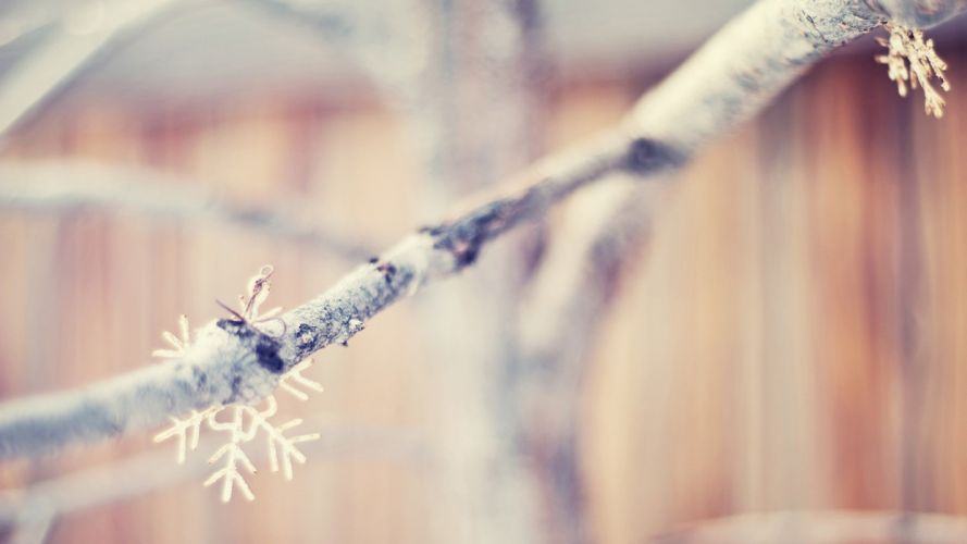 nature snowflakes macro dreamy depth of field blurred branches wallpaper