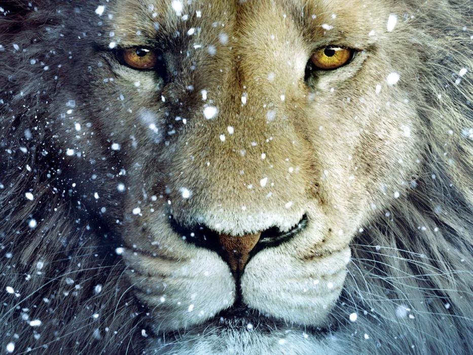 snow animals fantasy art lions chronicles of Narnia wallpaper