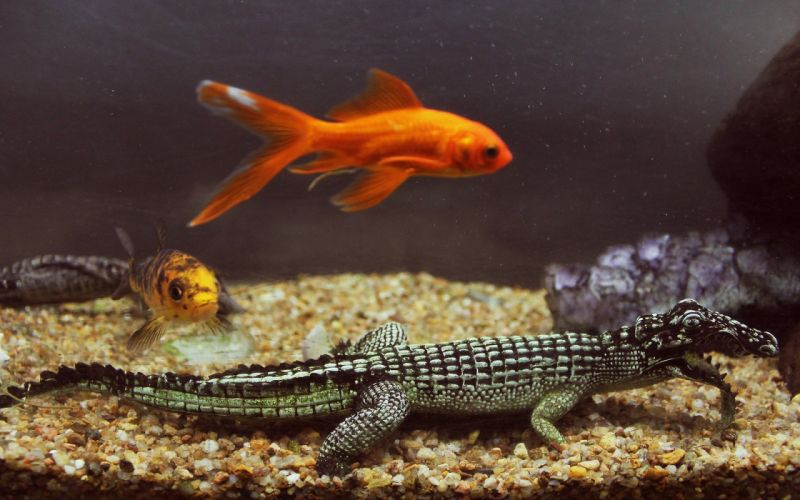fish reptiles wallpaper