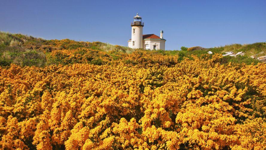Oregon wildflowers beaches wallpaper