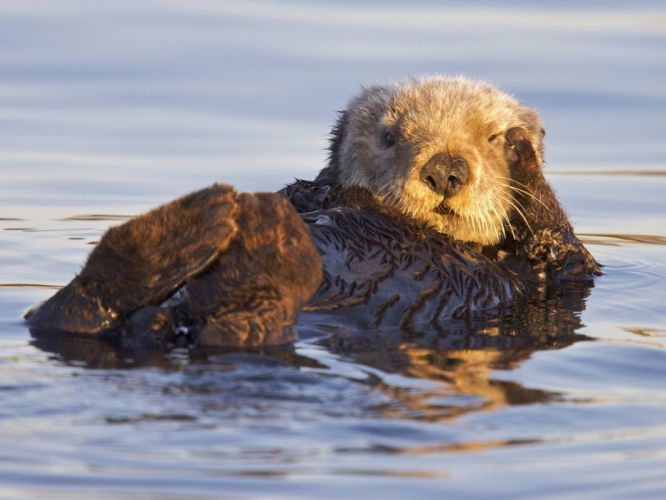 nature California US Marines Corps otters bay Sanctuary Monterey wallpaper