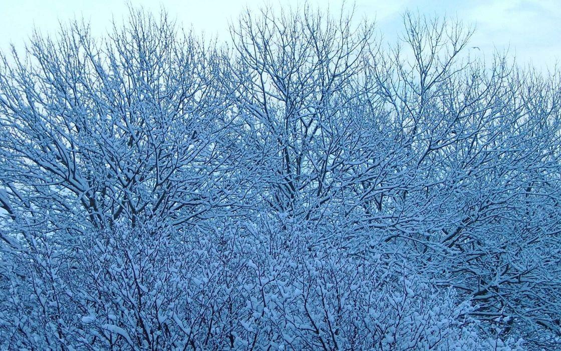 nature winter TV shows wallpaper