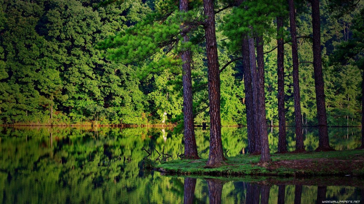landscapes nature forests lakes wallpaper