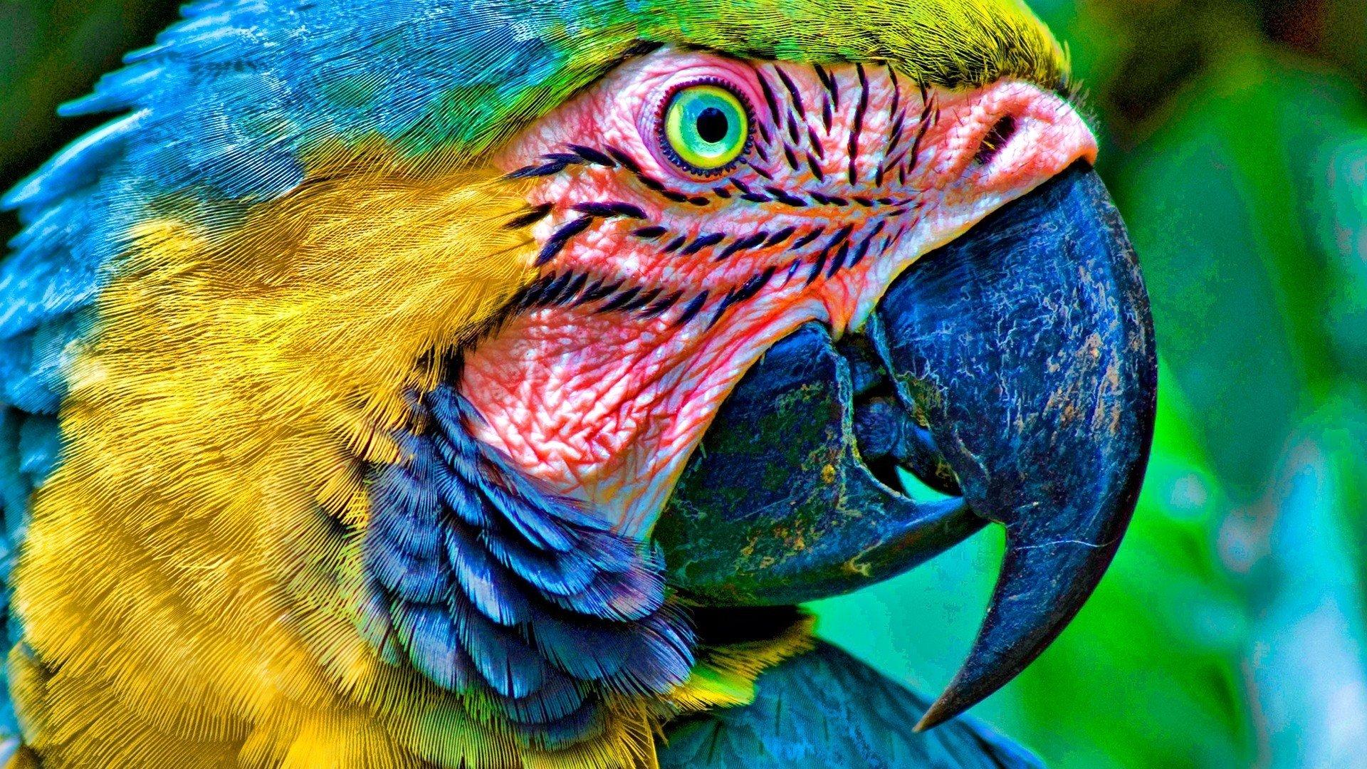Birds parrots Macaw Bl...