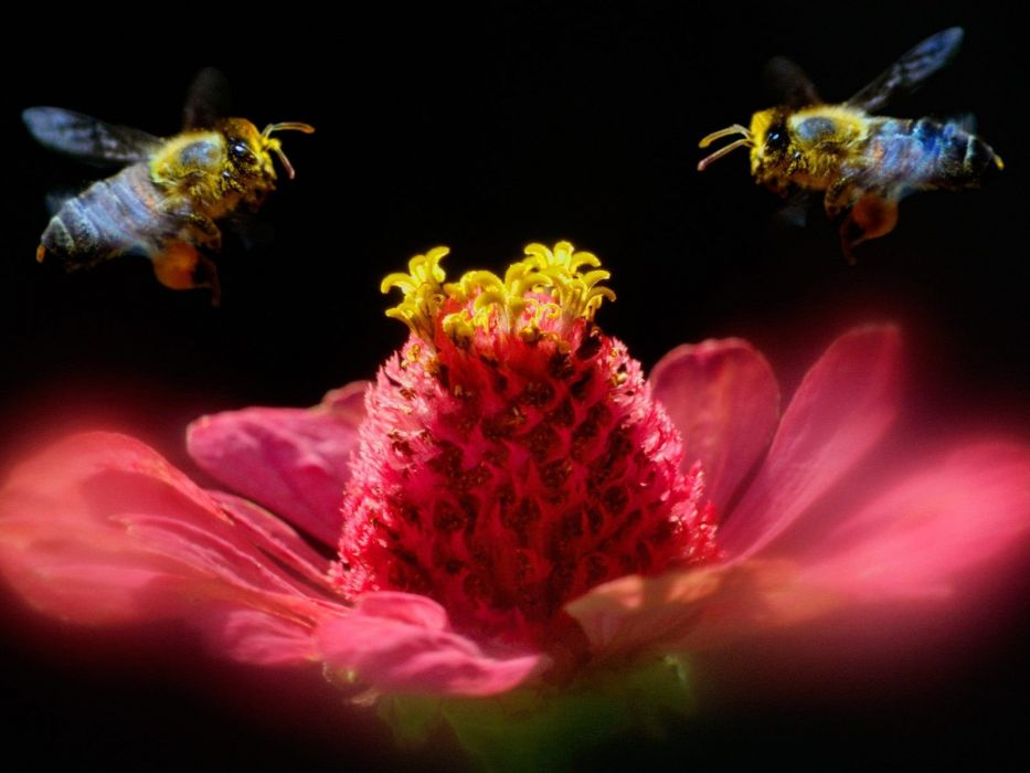 flowers insects shadows bugs macro bees wallpaper