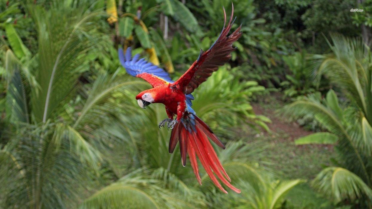 Animals Bird Parrot Macaw Wallpaper x