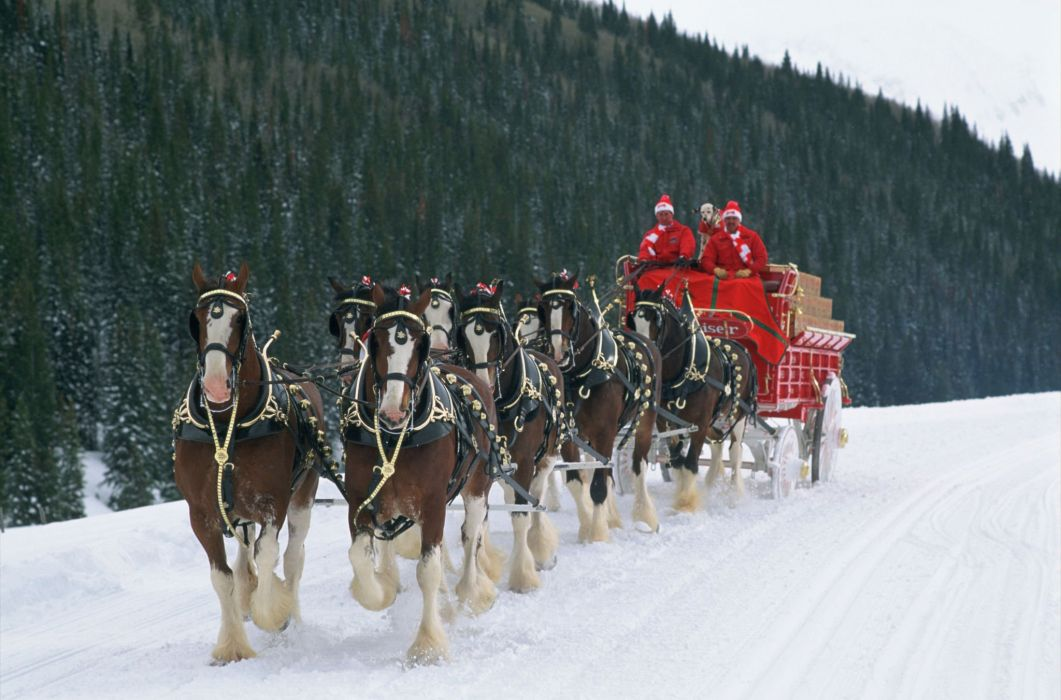 beer alcohol drink poster winter christmas horse horses wallpaper - Christmas Horses