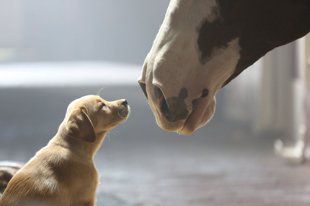 beer alcohol drink puppy baby horse horses mood cute television dog wallpaper