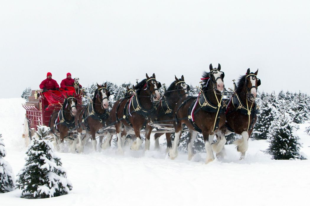 Beer Alcohol Drink Poster Horse Horses Christmas Winter Snow Wallpaper 2500x1667 334858 Wallpaperup
