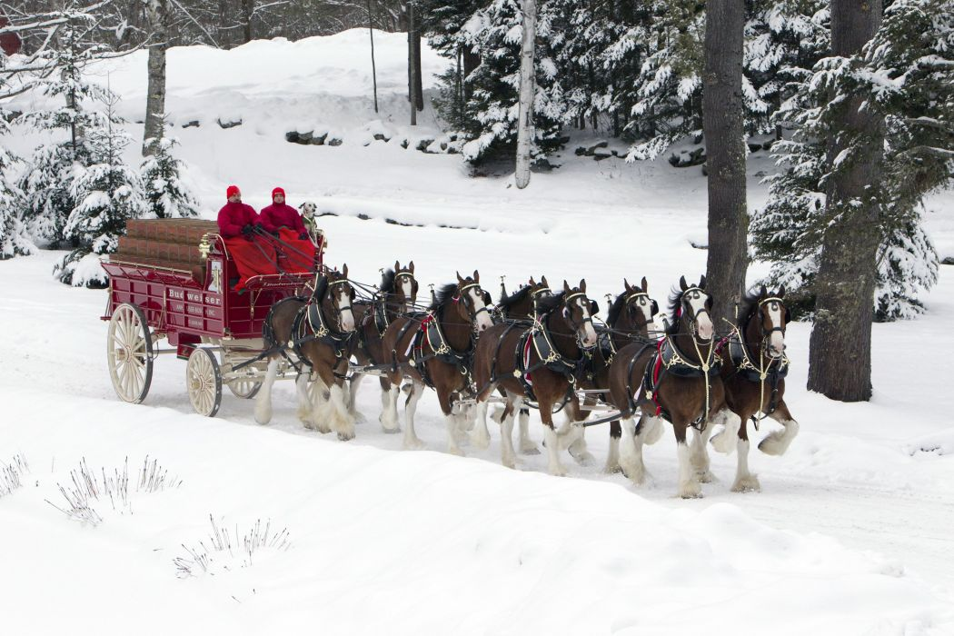 beer alcohol drink poster horse horses christmas winter snow wallpaper