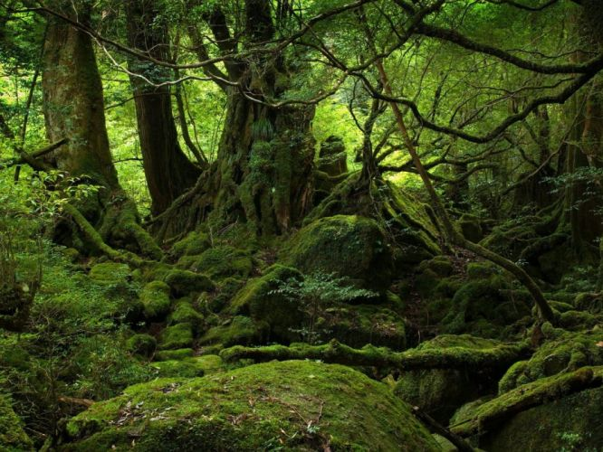 green nature trees forests woods wallpaper