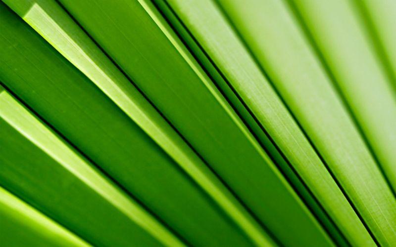 green plants lines wallpaper