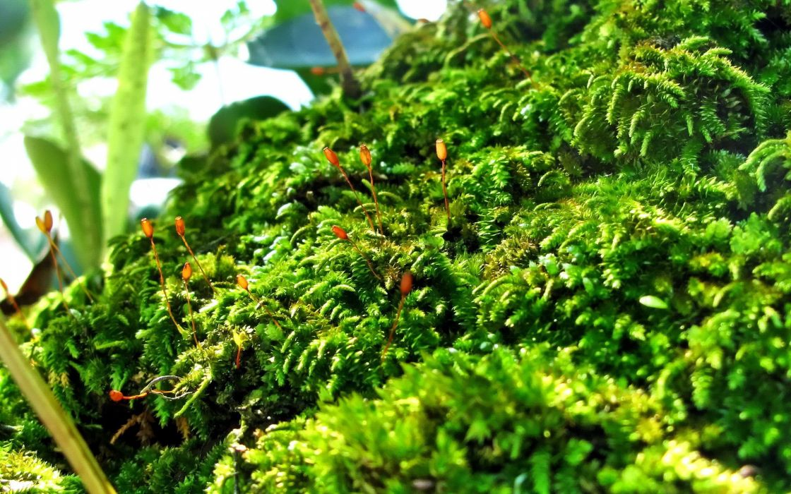green close-up nature plants moss macro wallpaper