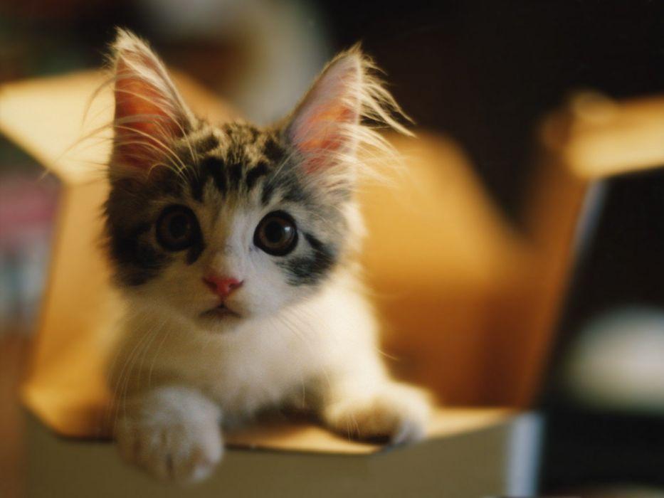 cats animals curious shock kittens wallpaper