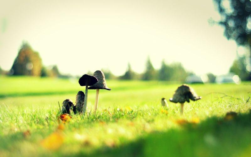grass mushrooms macro wallpaper