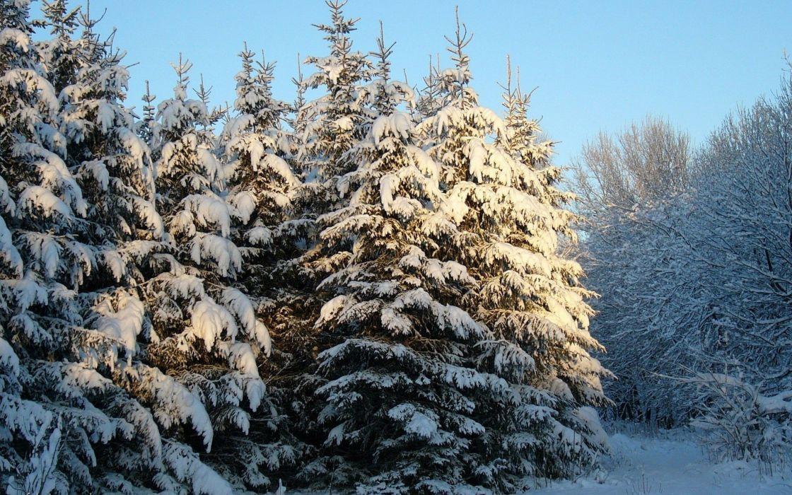 nature winter snow wallpaper