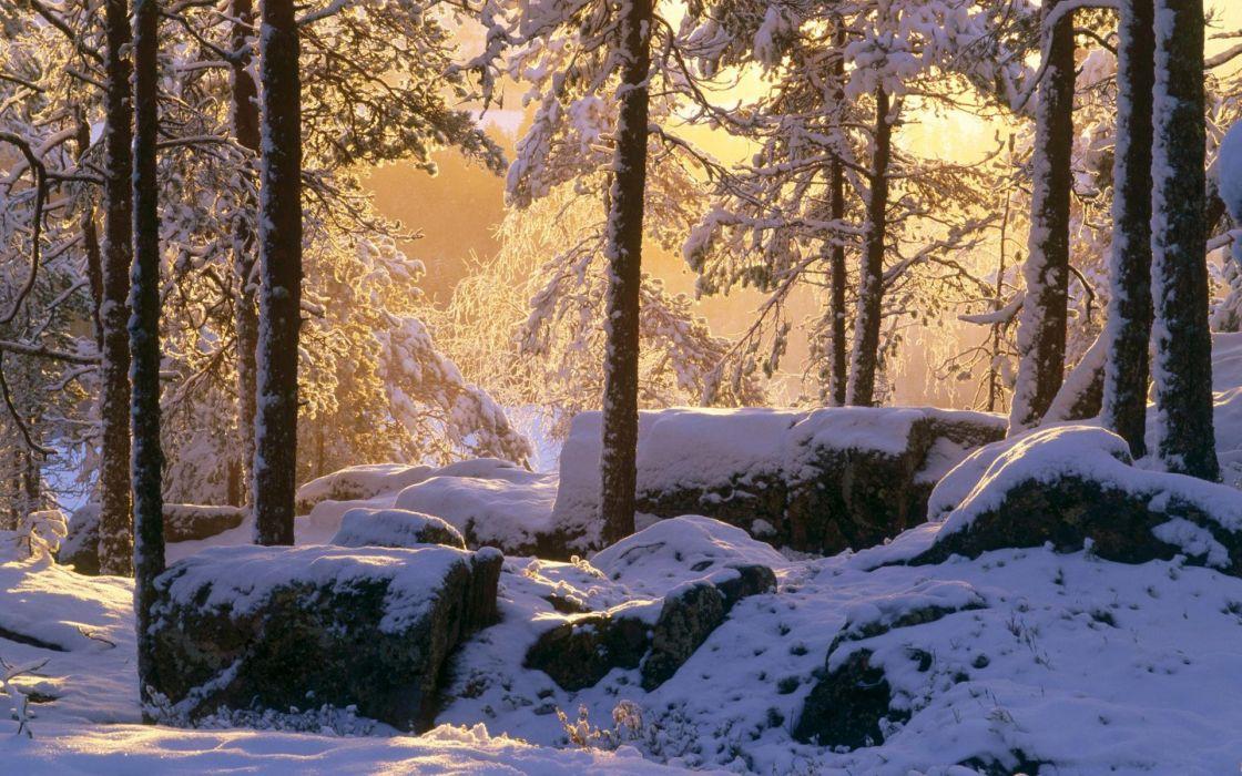nature winter snow trees rocks sunlight wallpaper
