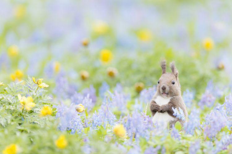 animal protein flowers bokeh squirrel wallpaper