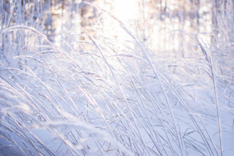 beauty winter forest nature snow grass bokeh wallpaper