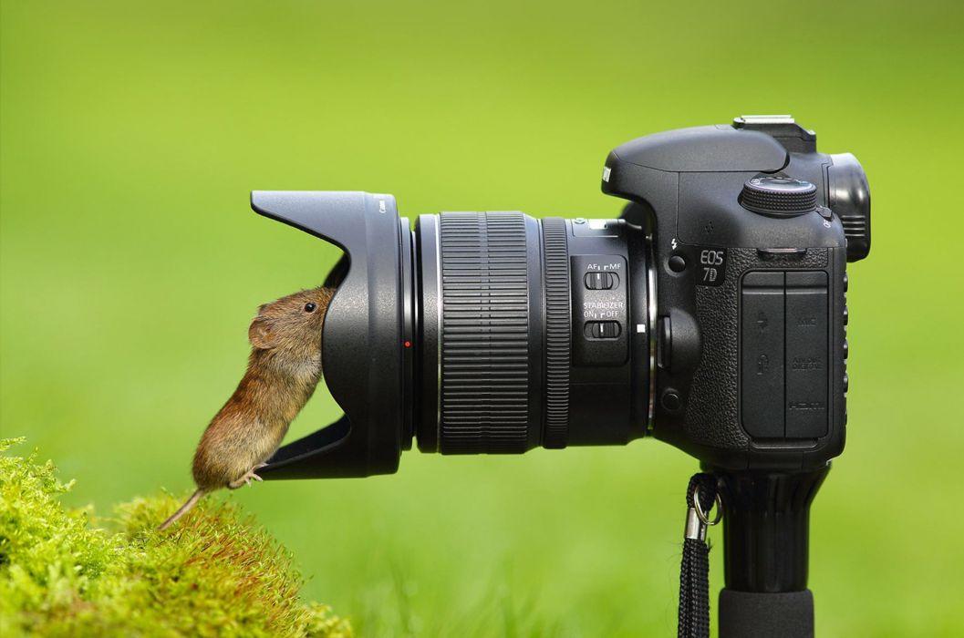 camera mouse lens wallpaper